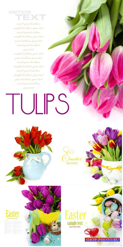 Tulips and Easter eggs - stock photos