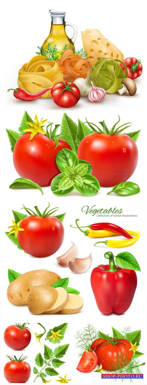 Tomatoes, cheese, pepper vector