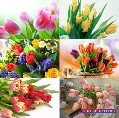 Клипарт для фотошопа - Тюльпаны