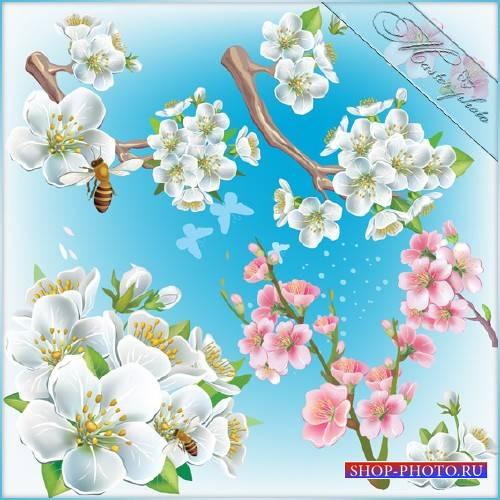 PSD исходник для photoshop - Весенний цвет
