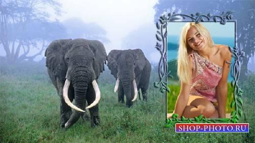 Рамка для фотошопа - Два слона