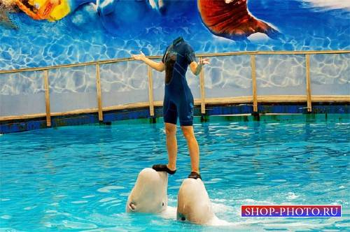 На двух дельфинах - Женский шаблон