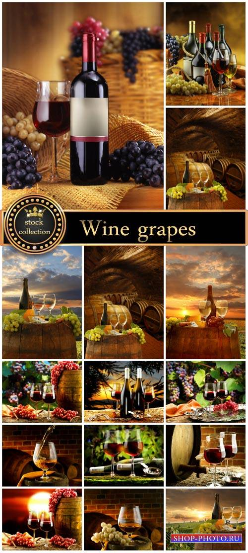 Wine, grapes, nature - stock photos