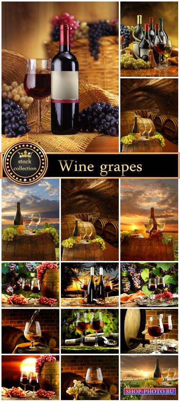 Wine, grapes, nature - stock photos