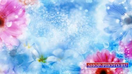 Фоновый футаж с цветами - на голубом фоне