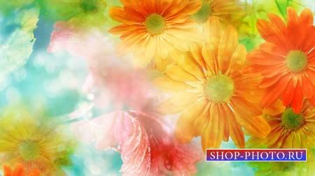 Анимированный фон с цветами