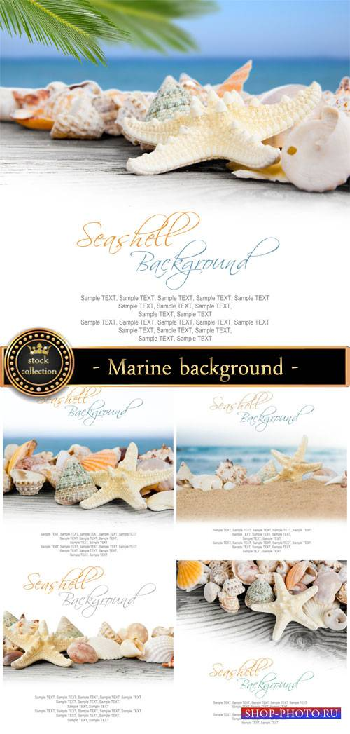 Marine background with shells - stock photos