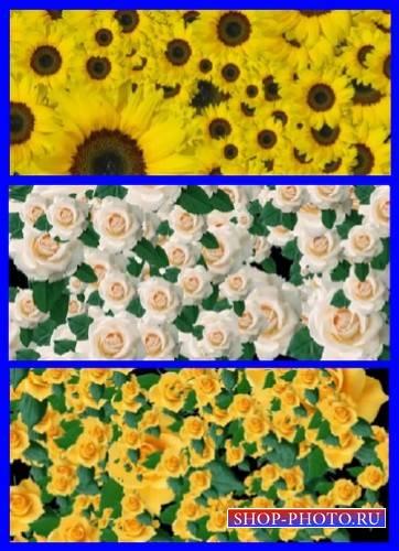 Подборка фоновых футажей с цветами