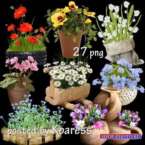 Клипарт для дизайна - Садовые и комнатные цветы в корзинах, вазонах, горшка ...