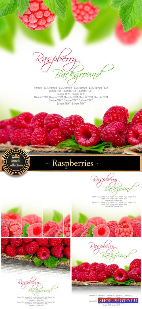 Raspberries background with fresh berries - Stock Photo