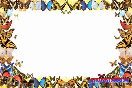 Летняя фоторамка - Озорные бабочки