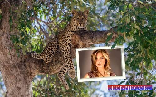 Рамка к фото - Красивый леопард на ветке