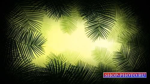 Футаж - Пальмовые ветви