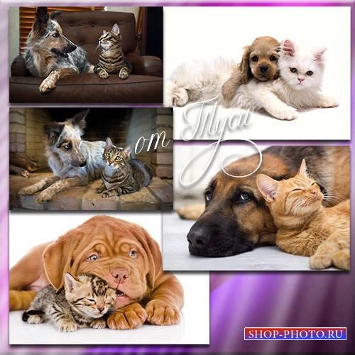 Клипарт - Коты и собаки - гармоничные отношения