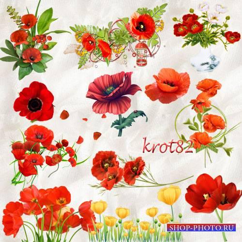 Цветочный клипарт и кластеры – Букет маков