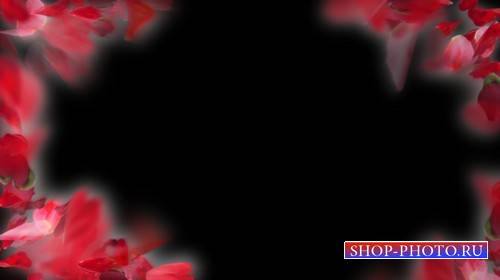 Футаж с нежными лепестками роз