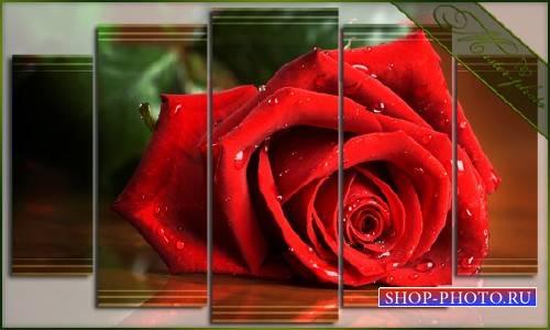 PSD Модульная картинка - Алая роза