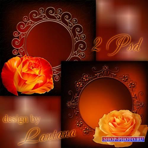 PSD исходники - Ароматная нежная роза, как нарядны твои лепестки