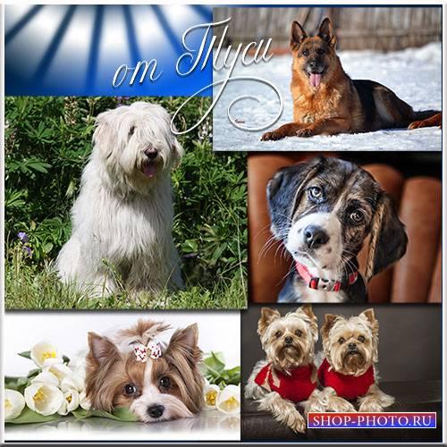 Собаки разных пород - для любви и для защиты - Клипарт