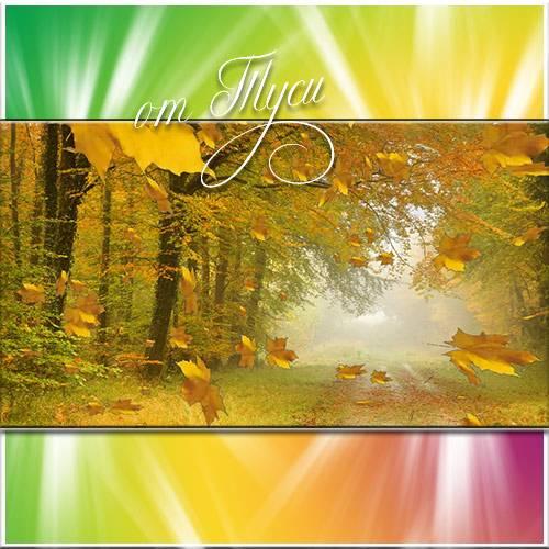 Осенний лес одет в багрянец - Футажи для видеомонтажа