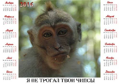 На 2016 год календарь - Честная обезьяна