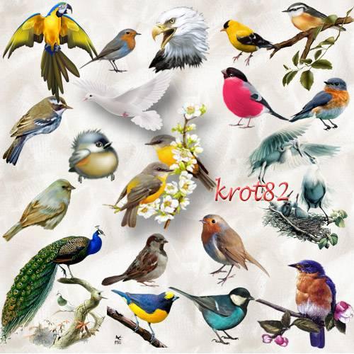 Клипарт на прозрачном фоне  – Птицы в PNG