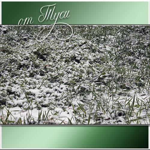 Снег на зелёной траве - Живое видео