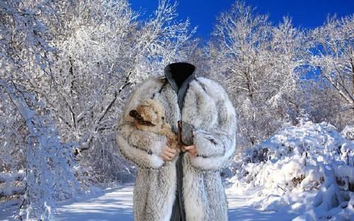 Гламурная девушка в шубе с собачкой - шаблон psd женский