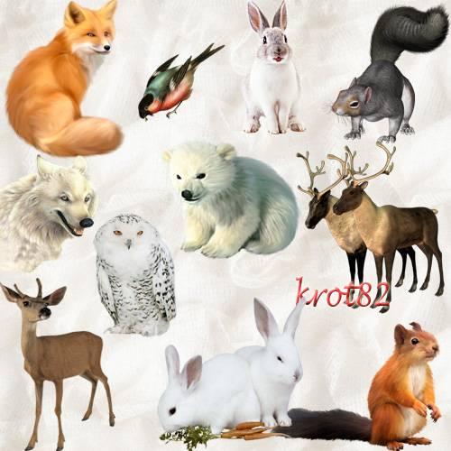 Клипарт PNG животные и птицы – Белки, олени, волки, лиса, заяц, снегири и с ...