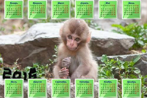 Милая обезьяна на камне - На 2016 год календарь