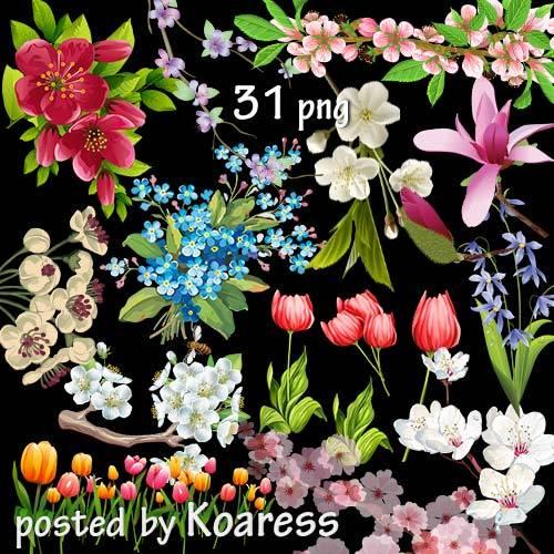 Подборка нарисованных весенних цветов и цветущих веток на прозрачном фоне