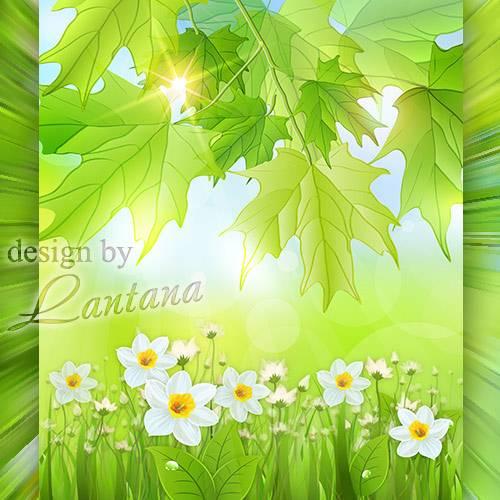 PSD исходник - Цветут нарциссы в солнечных лучах