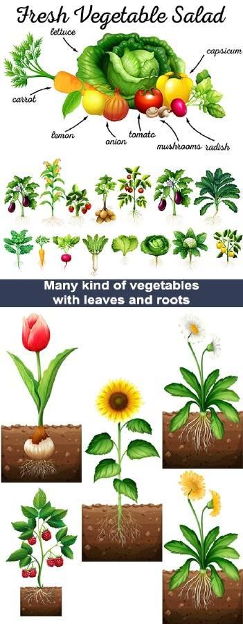 Овощи, цветы и ягоды с листьями и корнями
