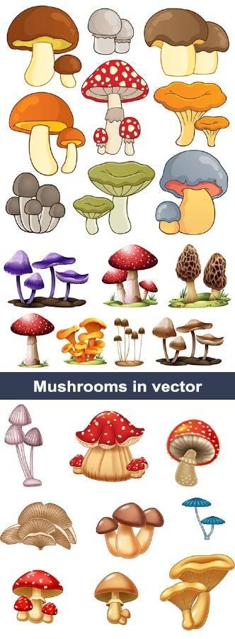Векторный клипарт Грибы | Vector clipart Mushrooms