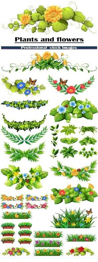Растения и цветы