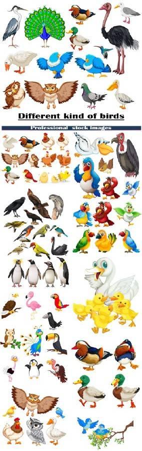 Различные виды птиц