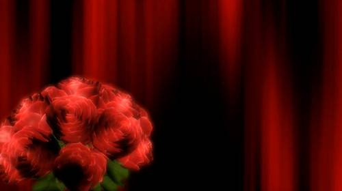 Фоновый футаж с вращающимся букетом роз