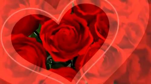 Футаж - Композиция из роз
