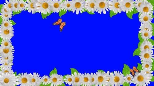 Футаж на хромакее - Рамочка из ромашек