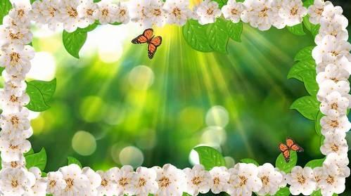Видео футаж с цветущей сакурой