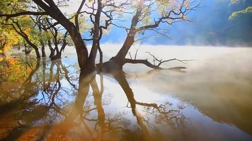 Футаж - Лесное озеро в тумане