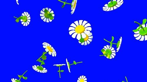Футаж на хромакее - Падающие ромашки