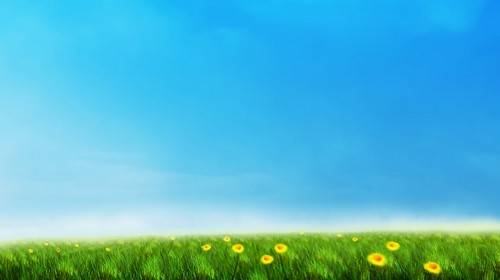 Видео футаж - Цветочный луг