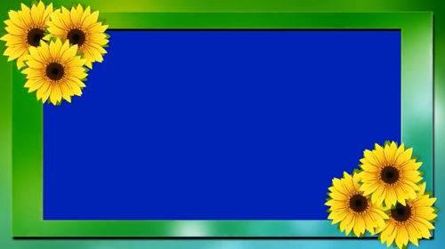 Футаж на хромакее с подсолнухами