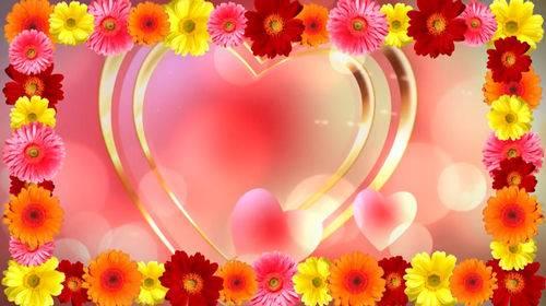 Футаж - Сердце с рамкой из гербер