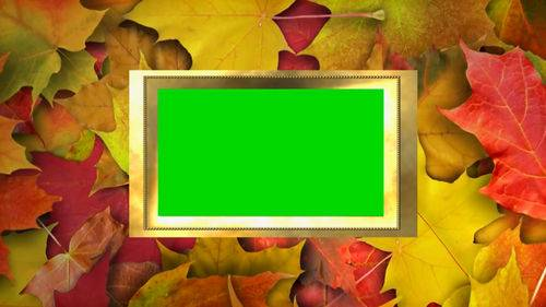 Футаж на хромакее - Рамка и осенние листья