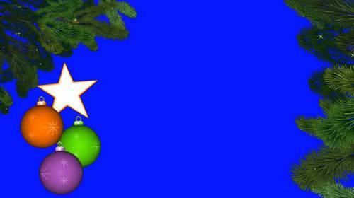 Футаж на хромакее с ветвями ели
