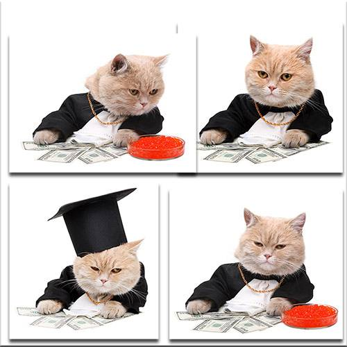 Кот бизнесмен / Cat businessman