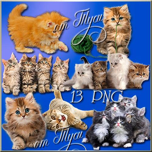 Клипарт - Пушистые котята / Clip Art -  Fluffy kittens