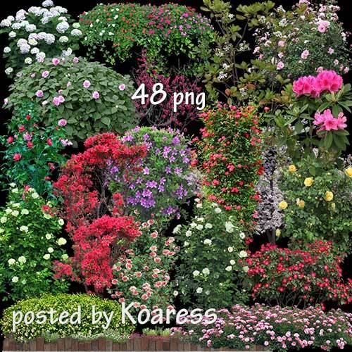 Png клипарт для дизайна - Цветущий сад